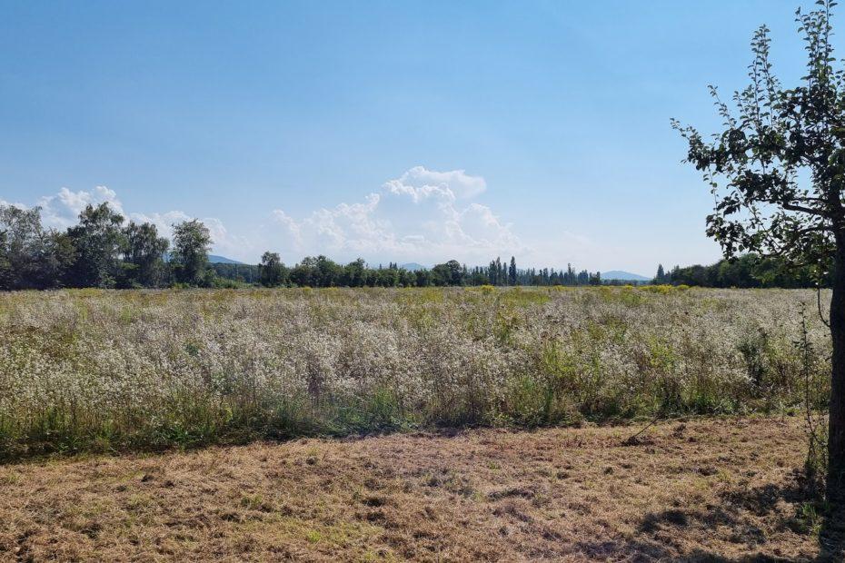 Landwirtschaft und Artenvielfalt - Biodiversität in Durmersheim